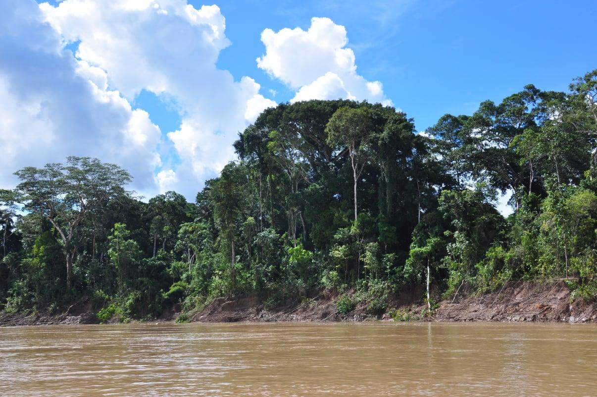 Amazoneregenwoud