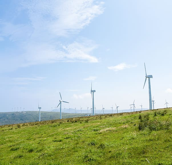 Field of wind turbines
